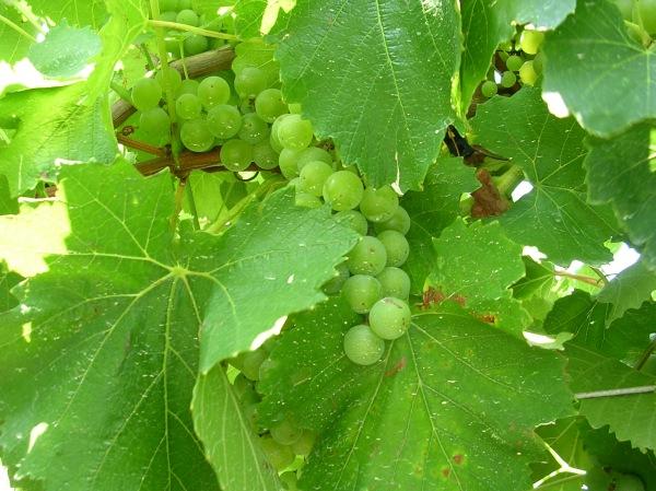 wineries-031