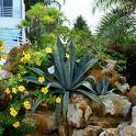 landscaping images