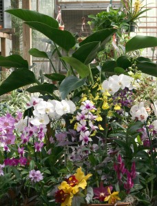 Tall.Nurseries Orchids 090