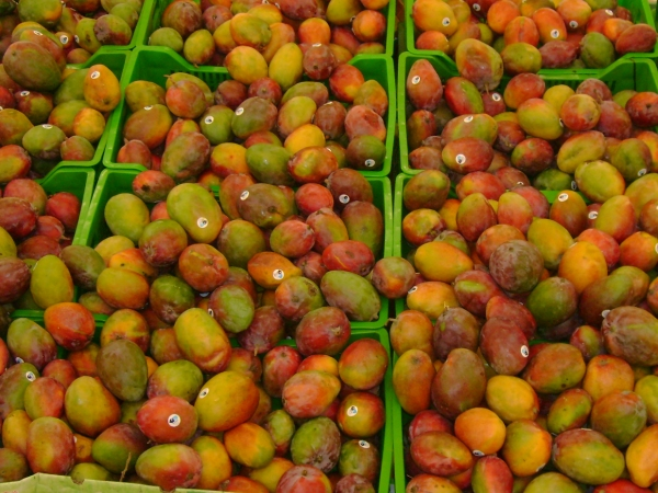 are freeze dried fruits healthy dwarf fruit trees home depot