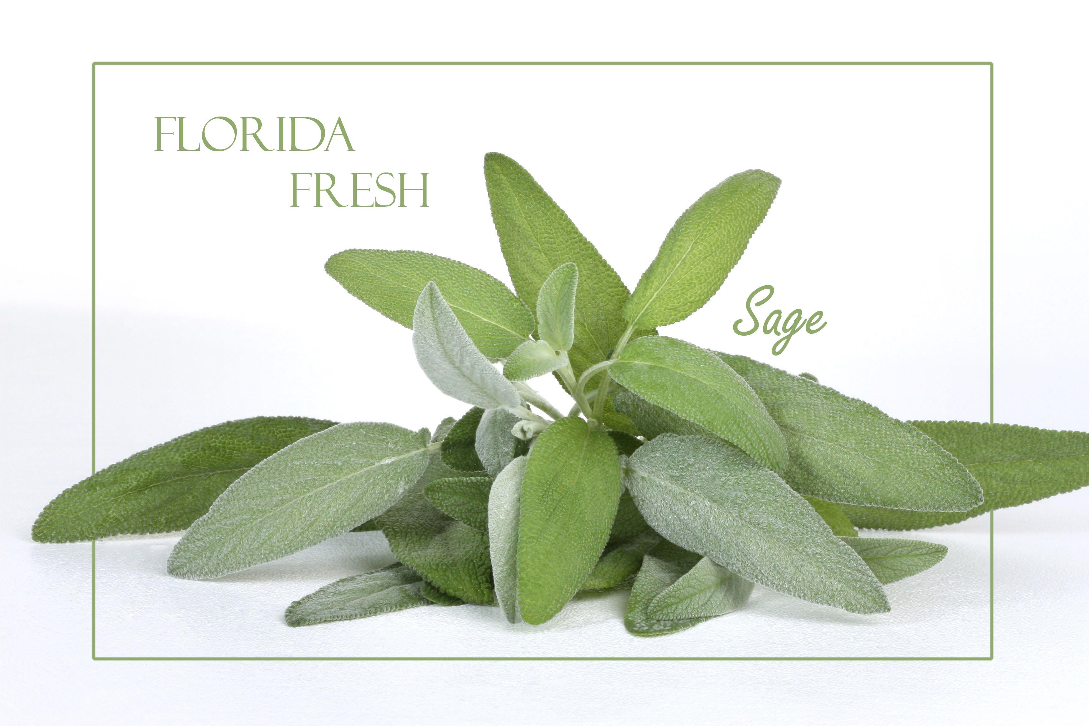 Herbs to treat sore throat