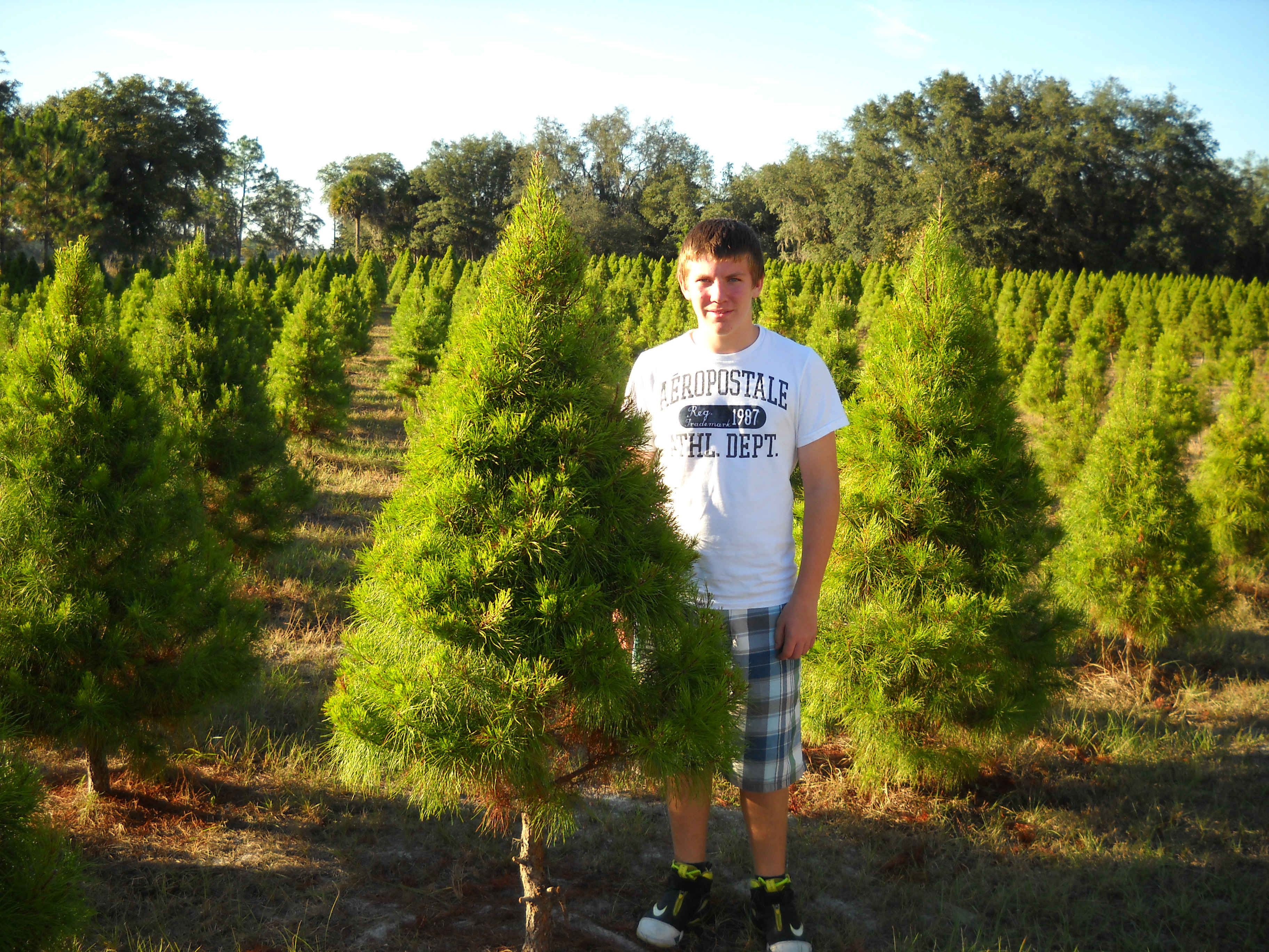 Christmas Tree Farms In Florida